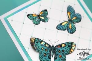 mother of butterflies2
