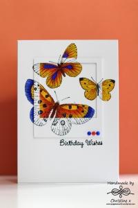 Butterfly polaroid