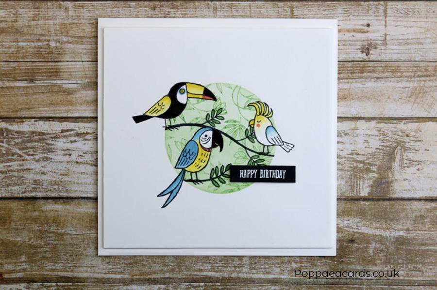 BirdBanterMuse251